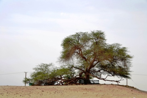 Desert 461