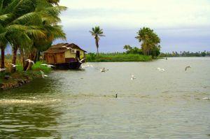 Kerala_backwater
