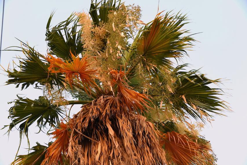Summer Palm Tree Bahrain