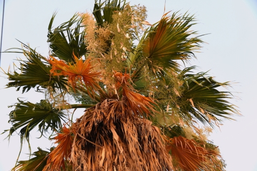 Summer Palm Tree Bahrain