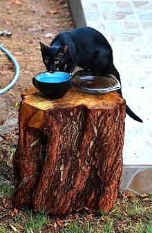 Catty Cat 1