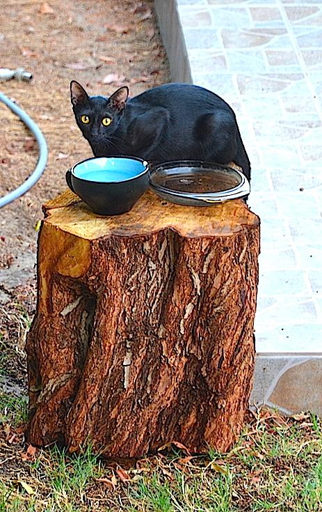 Catty Cat 3