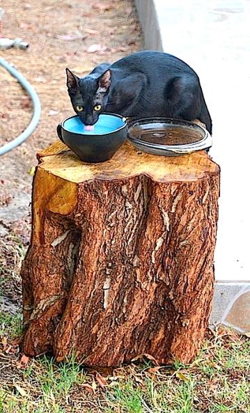 Catty Cat