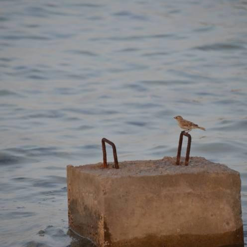 sparrow5