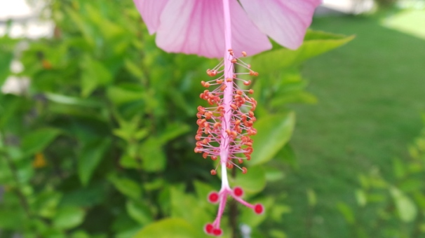 macro-flower1