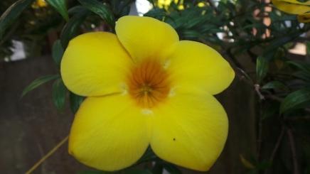 macro-flower10