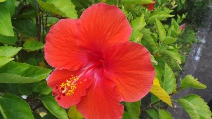 macro-flower3