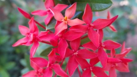 macro-flower7