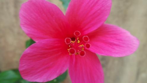 macro-flower9